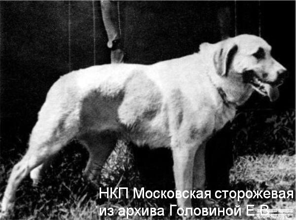 http://www.nkp-moskstorozh.ru/photos/istorieaoprodyii/1_kara.jpg